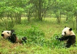 Un Panda per DUE